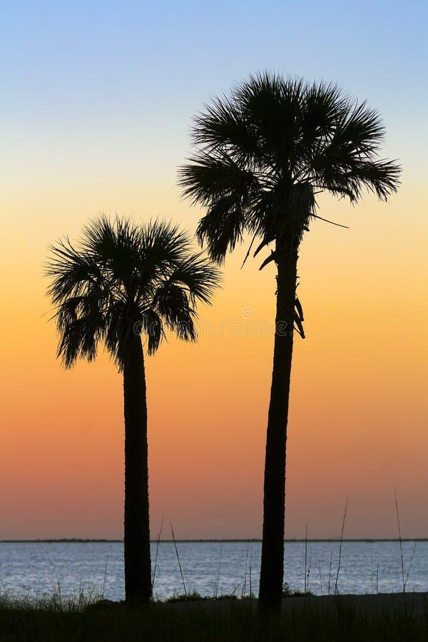 Σκιαγραφημένοι φοίνικες στο ηλιοβασίλεμα στοκ φωτογραφία