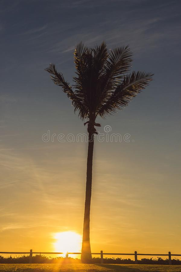 Σκιαγραφημένος του δέντρου καρύδων κατά τη διάρκεια του ηλιοβασιλέματος, δυτική Αυστραλία Broome στοκ φωτογραφία με δικαίωμα ελεύθερης χρήσης