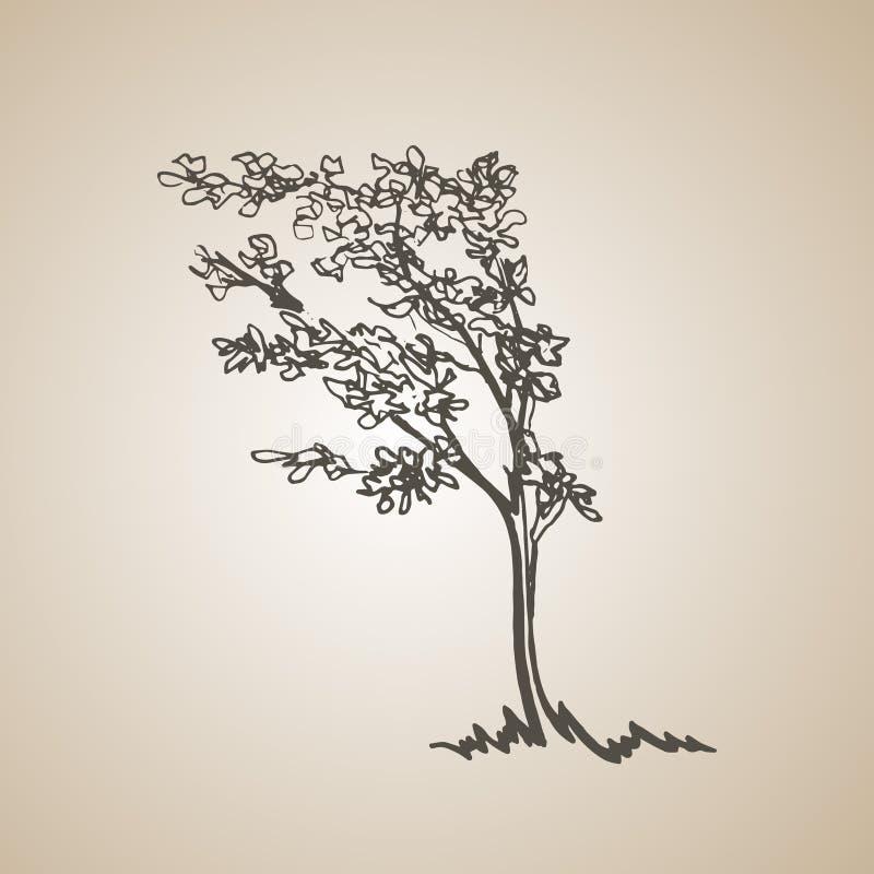 Σκιαγραφημένο δέντρο στον αέρα συρμένος εικονογράφος απεικόνισης χεριών ξυλάνθρακα βουρτσών ο σχέδιο όπως το βλέμμα κάνει την κρη απεικόνιση αποθεμάτων