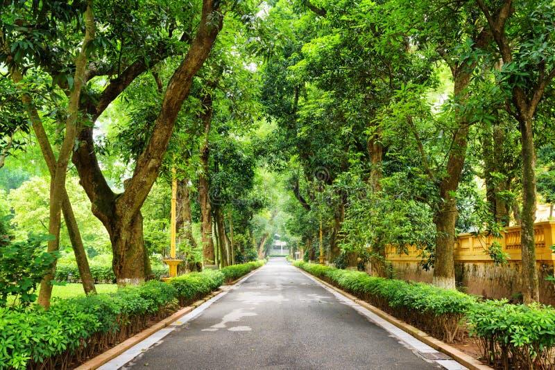 Σκιερή διάβαση πεζών με τα τροπικά δέντρα στο βοτανικό κήπο στο Ανόι στοκ εικόνα με δικαίωμα ελεύθερης χρήσης