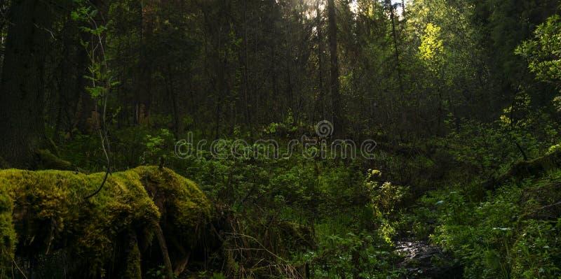 Σκιερό δασικό αλσύλλιο στοκ φωτογραφία