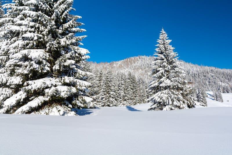 Σκι στο τεράστιο βουνό με χιόνι κατά τη διάρκεια του χειμώνα, Πολωνία και Τσεχική Δημοκρατία στοκ φωτογραφίες με δικαίωμα ελεύθερης χρήσης