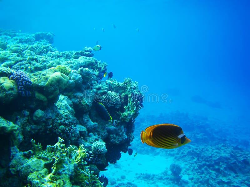 σκληρή κόκκινη θάλασσα σ&kappa στοκ εικόνες με δικαίωμα ελεύθερης χρήσης