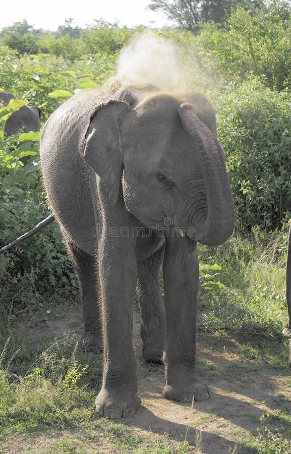 σκονισμένος ελέφαντας στοκ εικόνες