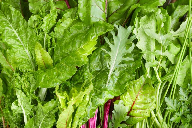 Σκοτεινά φυλλώδη πράσινα σαλάτας στοκ εικόνες