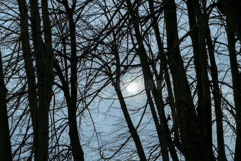 Σκοτεινή άδεια πάρκων σκηνής λιγότερα δέντρα στοκ φωτογραφίες με δικαίωμα ελεύθερης χρήσης
