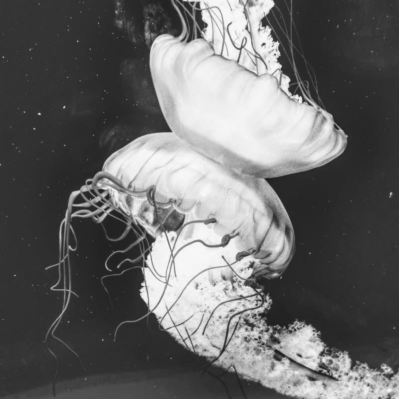 Σκοτεινή ζελατίνα στοκ φωτογραφία με δικαίωμα ελεύθερης χρήσης
