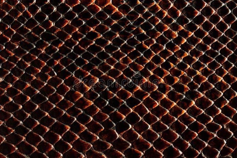 Σκοτεινή καφετιά σύσταση snakeskin στοκ εικόνα με δικαίωμα ελεύθερης χρήσης