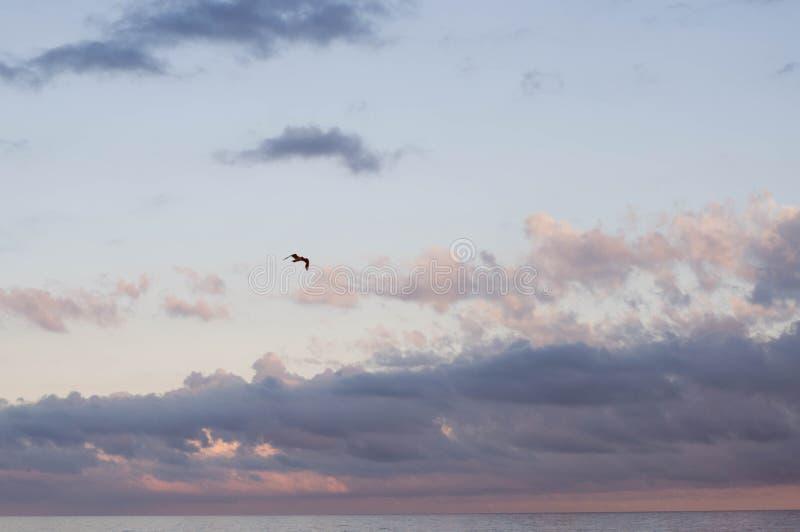 Σκοτεινή πετώντας seagull σκιαγραφία στον υψηλό σαφή ουρανό στοκ εικόνα με δικαίωμα ελεύθερης χρήσης