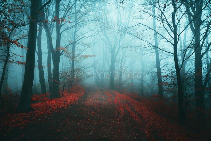 Σκοτεινή πορεία φρίκης στο ευμετάβλητο ομιχλώδες δάσος στοκ φωτογραφία με δικαίωμα ελεύθερης χρήσης