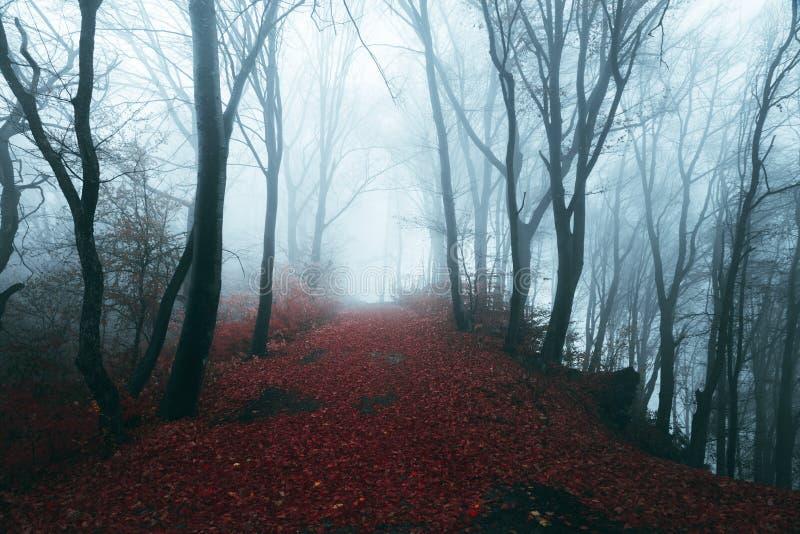 Σκοτεινή πορεία φρίκης στο ευμετάβλητο ομιχλώδες δάσος στοκ εικόνες