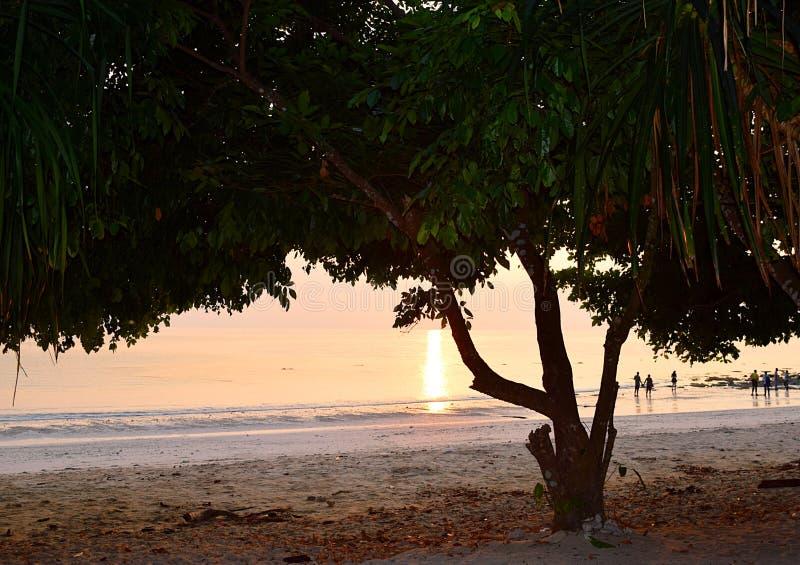 Σκοτεινή σκιά του δέντρου με τη χρυσή αντανάκλαση του φωτός του ήλιου στο θαλάσσιο νερό στο υπόβαθρο - περίληψη - παραλία Kalapat στοκ εικόνες