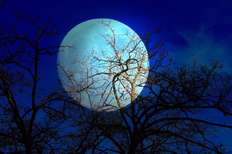Σκοτεινοί ουρανός και δέντρο στοκ φωτογραφία
