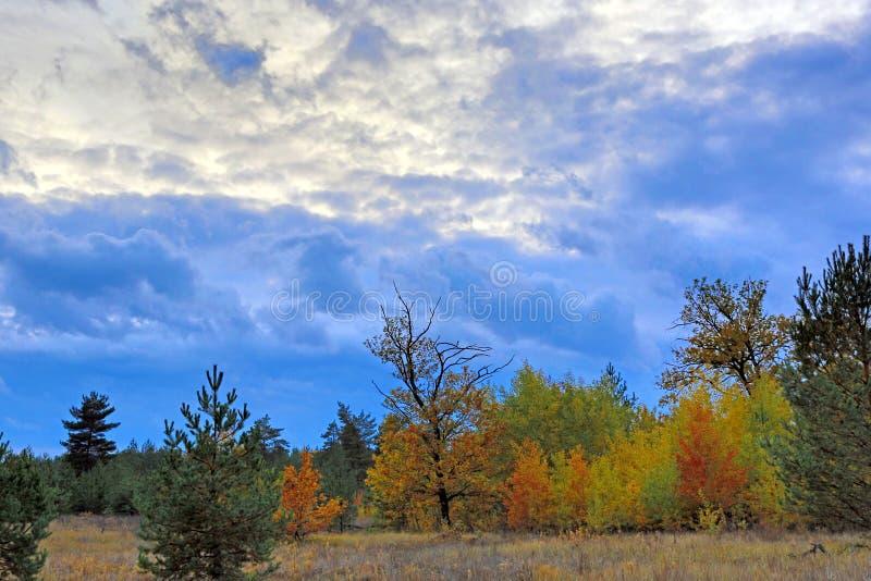 Σκοτεινός ουρανός πέρα από το δάσος φθινοπώρου στοκ φωτογραφίες