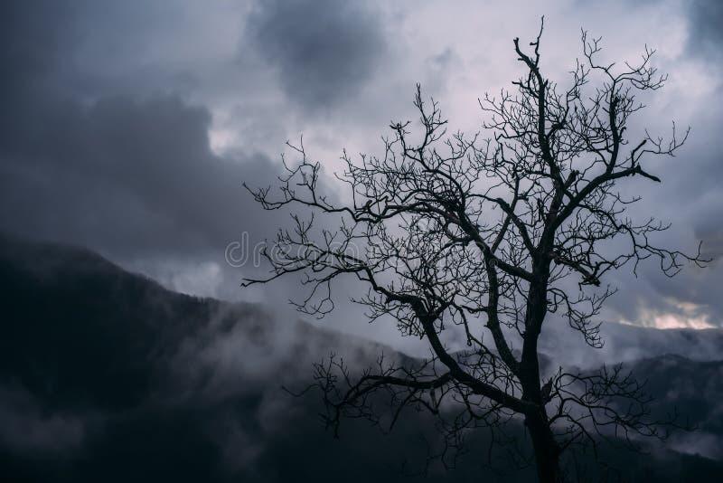 Σκοτεινός ουρανός σύννεφων δέντρων από την Τοσκάνη στοκ εικόνες
