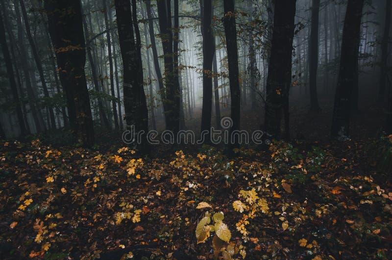 Σκοτεινό δασικό τοπίο με τη μυστήρια ομίχλη το φθινόπωρο στοκ εικόνες με δικαίωμα ελεύθερης χρήσης