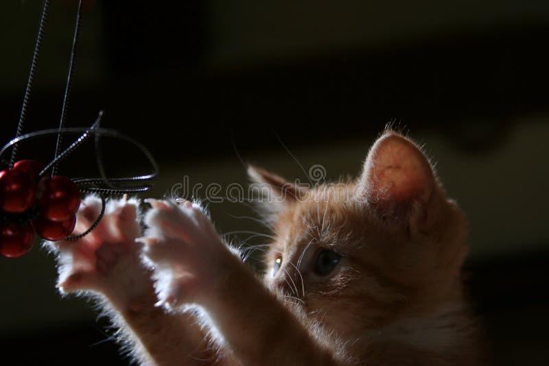 σκοτεινό γατάκι στοκ εικόνα με δικαίωμα ελεύθερης χρήσης