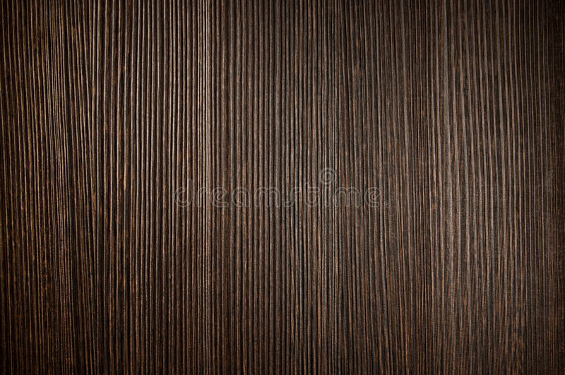 σκοτεινό δάσος σύστασης στοκ φωτογραφία με δικαίωμα ελεύθερης χρήσης