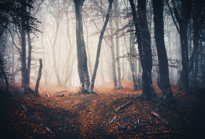Σκοτεινό δάσος φθινοπώρου με το ίχνος στην ομίχλη Ξύλα πτώσης στοκ φωτογραφίες με δικαίωμα ελεύθερης χρήσης