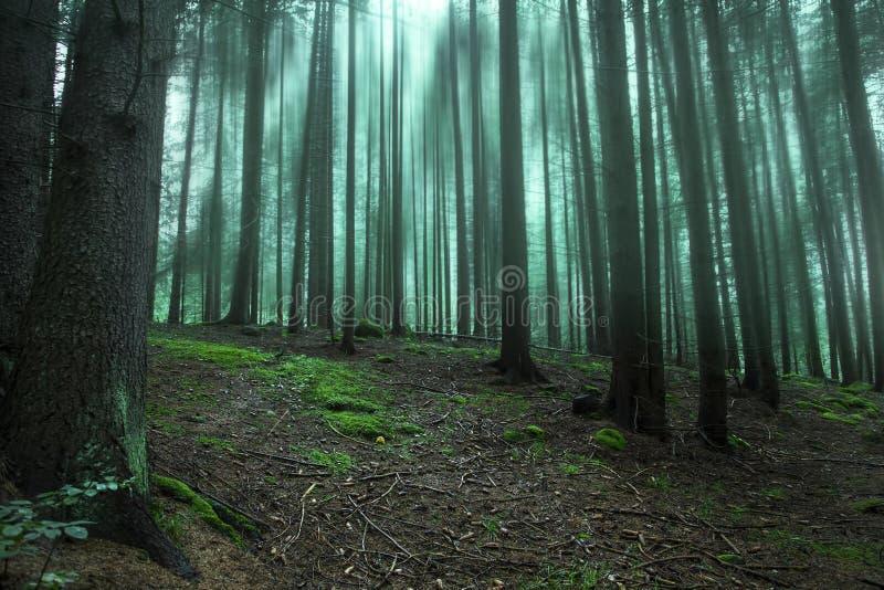 Σκοτεινό μαγικό δάσος με την ομίχλη και τα δέντρα στοκ εικόνες