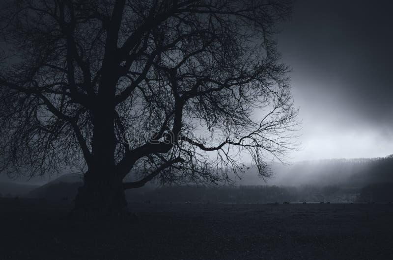 Σκοτεινό τοπίο με το γιγαντιαίο δέντρο τη νύχτα στοκ εικόνα με δικαίωμα ελεύθερης χρήσης