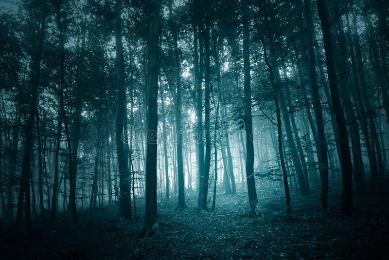 Σκοτεινό τυρκουάζ μπλε χρωματισμένο ομιχλώδες δάσος στοκ φωτογραφίες