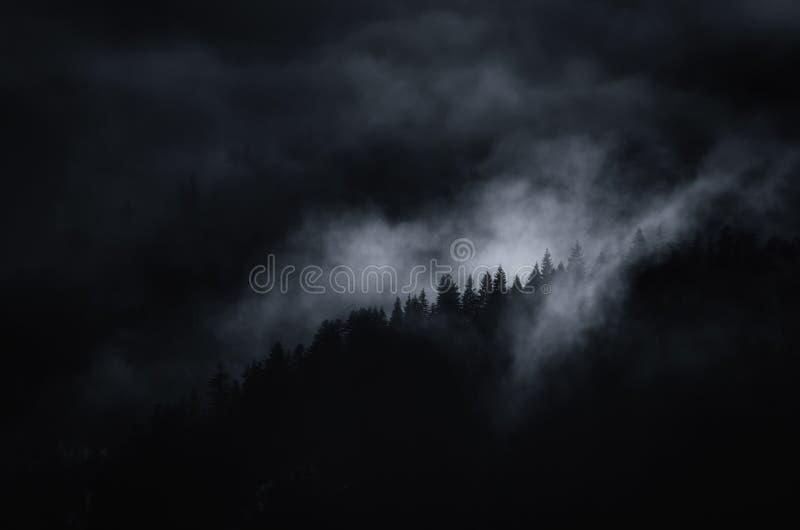 Σκοτεινό υπερφυσικό ethereal τοπίο με την υδρονέφωση που καλύπτει το δάσος πεύκων βουνών στοκ εικόνες