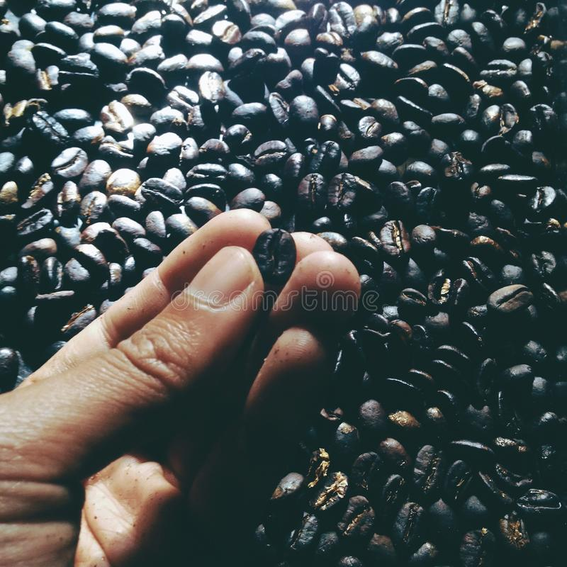 Σκοτεινό barista ψησίματος ψητού φασολιών καφέ στοκ εικόνες