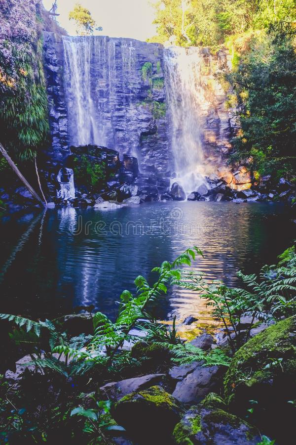 Σκοτεινό ethereal μαγικό δάσος - καταρράκτης Wairoa/Te Wairere μέσα στοκ φωτογραφίες