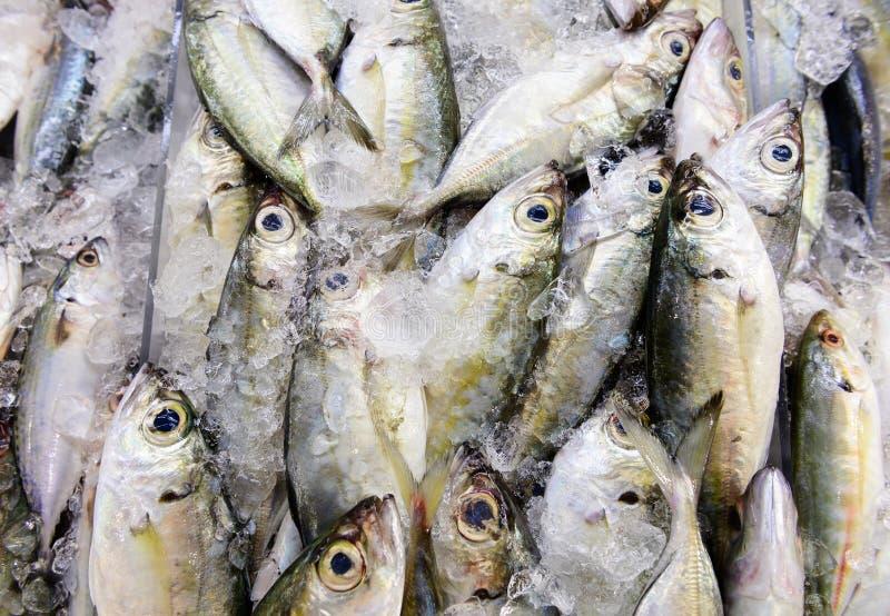 Σκουμπρί στον πάγο στην αγορά θαλασσινών στοκ φωτογραφίες