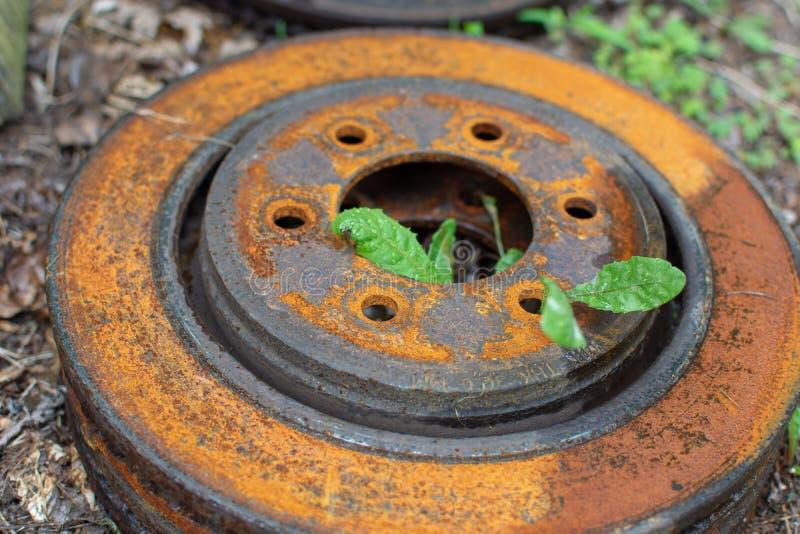 Σκουριασμένος στροφέας φρένων δίσκων μετάλλων με τα πράσινα ζιζάνια στοκ φωτογραφία με δικαίωμα ελεύθερης χρήσης