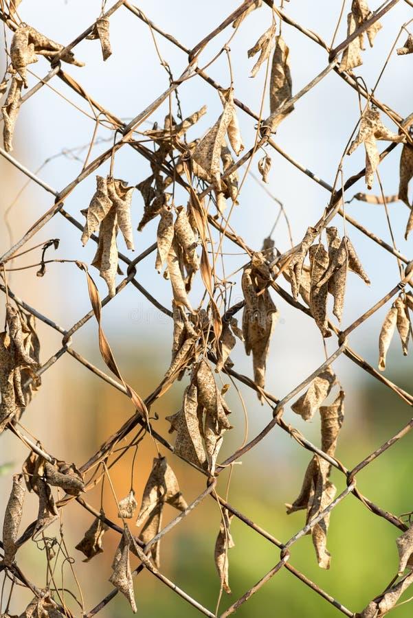 Σκουριασμένος φράκτης με τα ξηρά φύλλα στοκ εικόνες με δικαίωμα ελεύθερης χρήσης