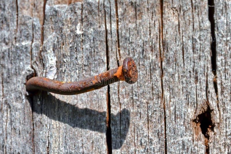 Σκουριασμένο καρφί στοκ εικόνα με δικαίωμα ελεύθερης χρήσης
