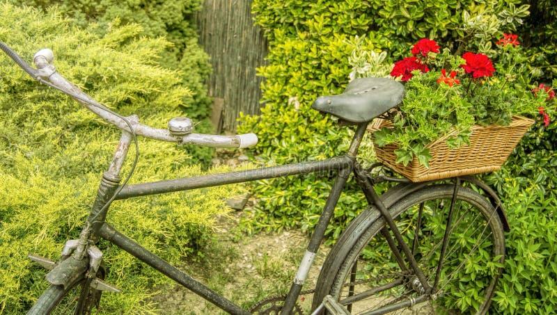 Σκουριασμένο παλαιό ποδήλατο με τα λουλούδια στοκ φωτογραφίες με δικαίωμα ελεύθερης χρήσης