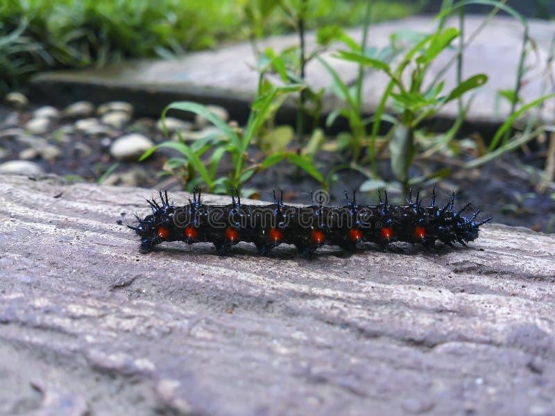 σκουλήκι φύσης στοκ φωτογραφία με δικαίωμα ελεύθερης χρήσης