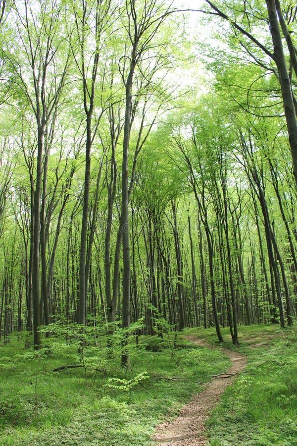Σκούρο πράσινο δασικό αλσύλλιο στοκ φωτογραφία με δικαίωμα ελεύθερης χρήσης