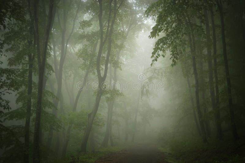 Σκούρο πράσινο ξύλα της Misty με την πορεία στοκ φωτογραφία με δικαίωμα ελεύθερης χρήσης