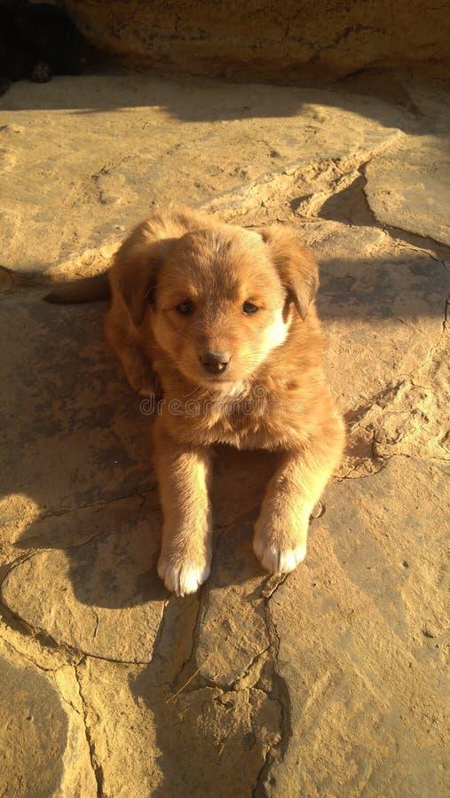 Σκυλάκι στοκ φωτογραφίες με δικαίωμα ελεύθερης χρήσης