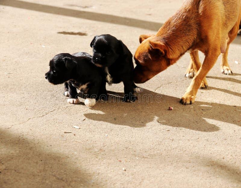 Σκυλί  ένα επώνυμο στοκ εικόνα