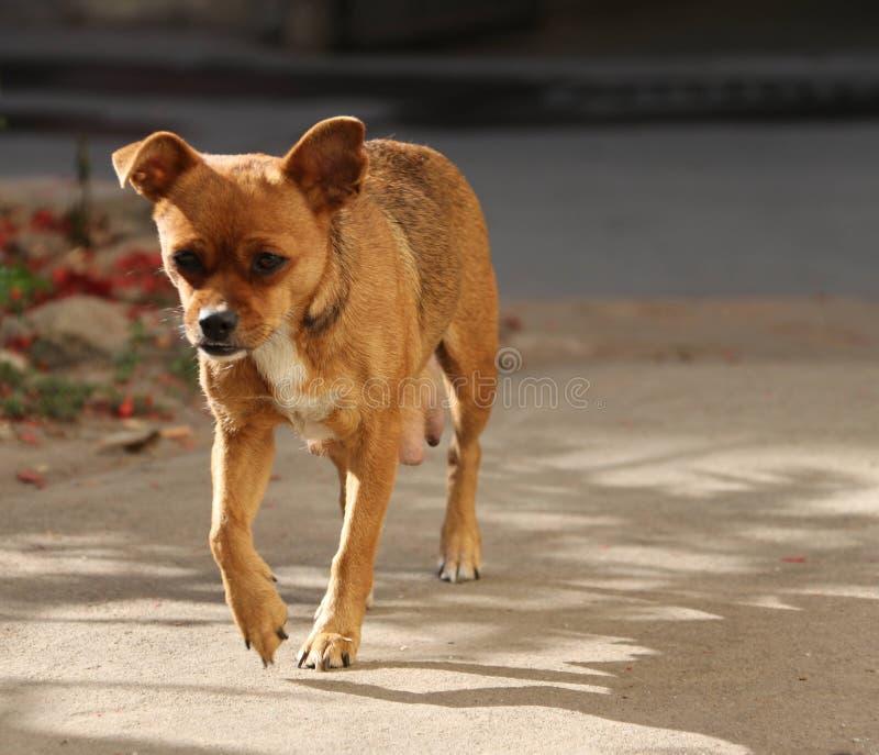 Σκυλί  ένα επώνυμο στοκ φωτογραφία