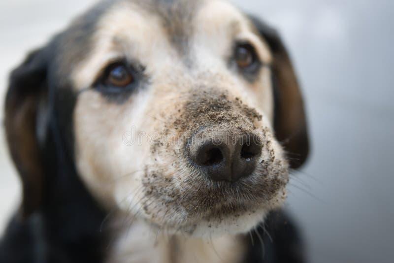 σκυλί ένοχο στοκ εικόνες