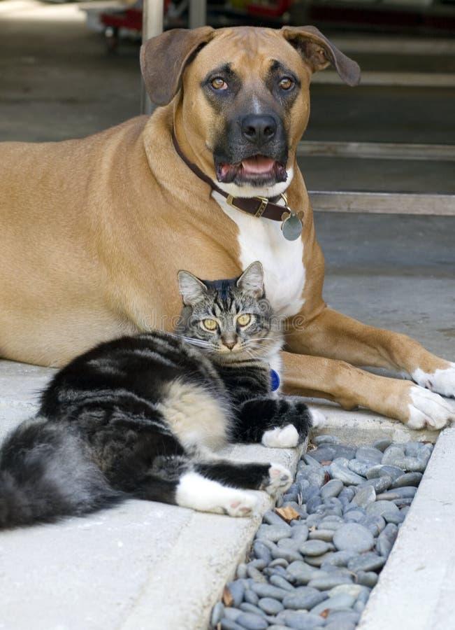 Download σκυλί γατών στοκ εικόνα. εικόνα από εύθυμος, κραχτών, γάτα - 1546147