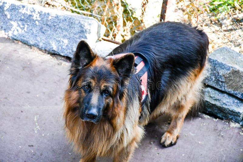 Σκυλί διάσωσης στοκ εικόνες
