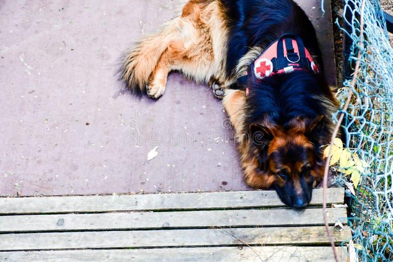 Σκυλί διάσωσης στοκ εικόνα με δικαίωμα ελεύθερης χρήσης