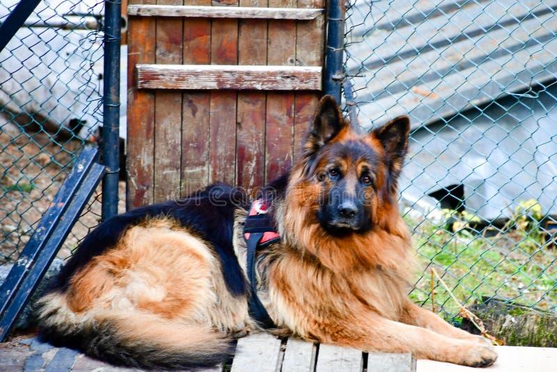 Σκυλί διάσωσης στοκ φωτογραφία με δικαίωμα ελεύθερης χρήσης