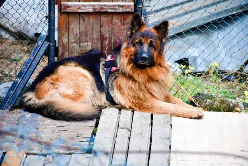 Σκυλί διάσωσης στοκ εικόνες με δικαίωμα ελεύθερης χρήσης