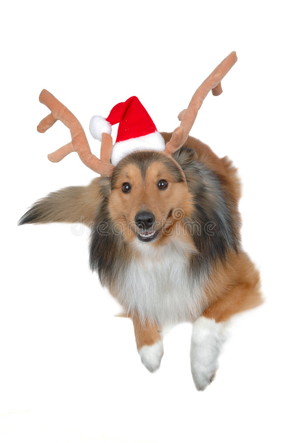 Download σκυλί ελαφιών Χριστουγέ&n στοκ εικόνα. εικόνα από σκυλιά - 395505