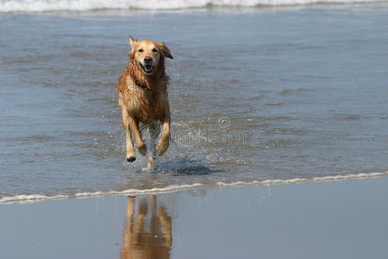 Download σκυλί ευτυχές στοκ εικόνες. εικόνα από θάλασσα, δαπάνη, παφλασμός - 54264