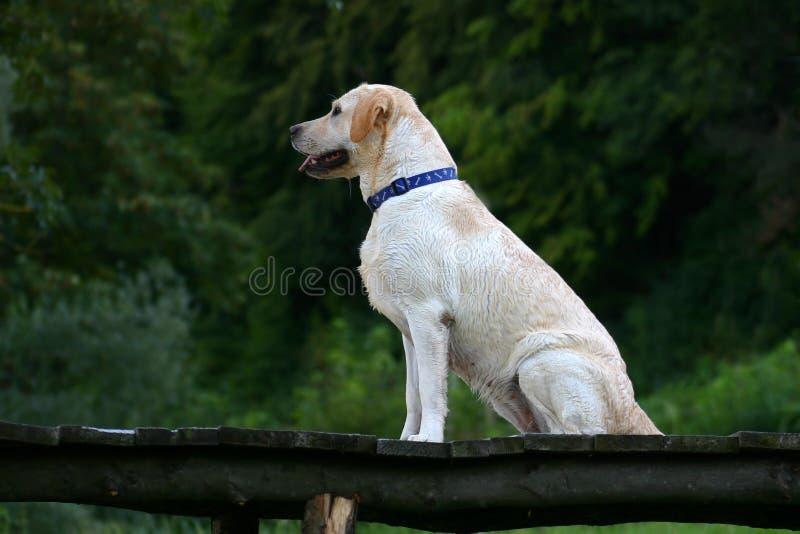 Download σκυλί ευτυχές στοκ εικόνα. εικόνα από συνεδρίαση, ευτυχής - 98591