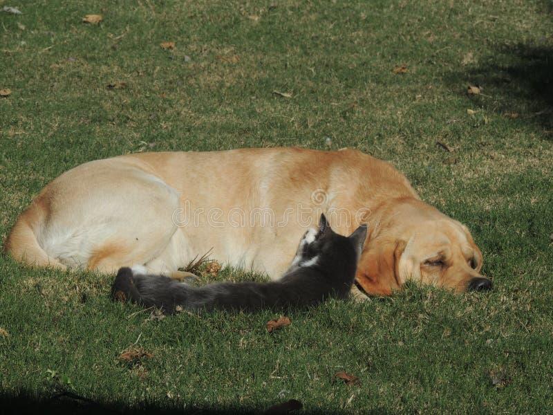 Σκυλί και γάτα, καλύτεροι φίλοι στοκ εικόνες